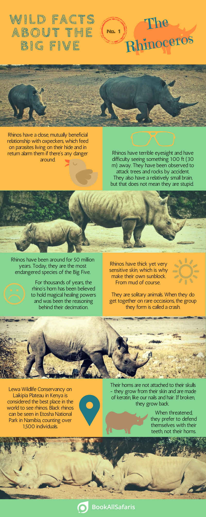 Wild Facts About the Big Five: No  1 – the Rhinoceros