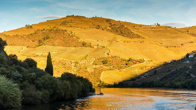vineyards along douro river valley