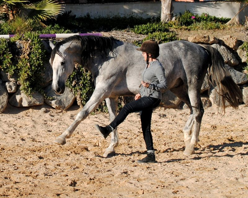 dressage horse riding holiday