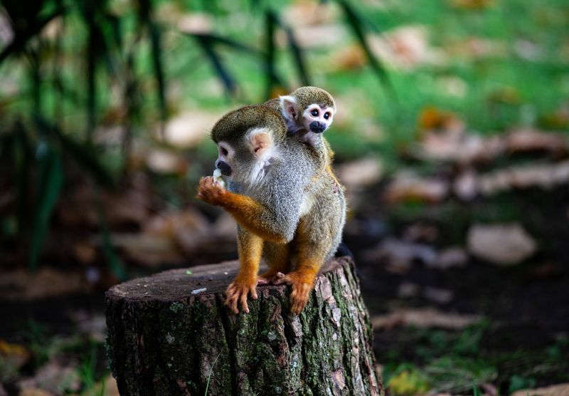 monkeys in the amazon
