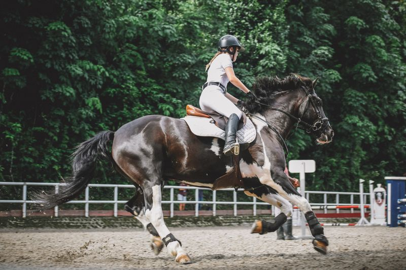 intermediate-horse-riding-lessons