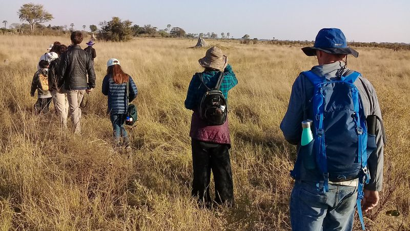 walking safari in the okavango delta