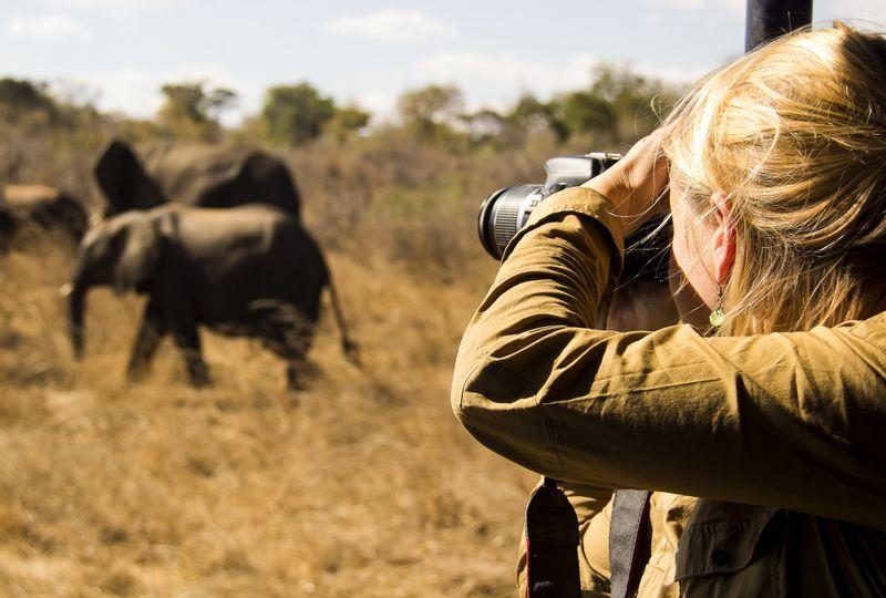 book wildlife photography safaris