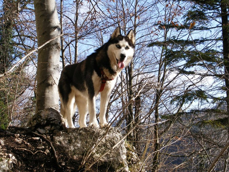hiking-dog