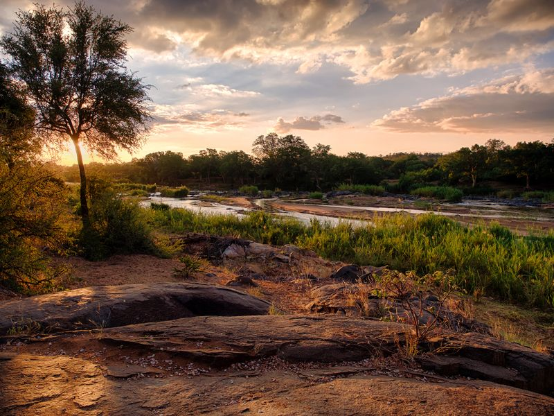 Budget safari in South Africa