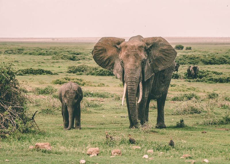 amboseli-national-park