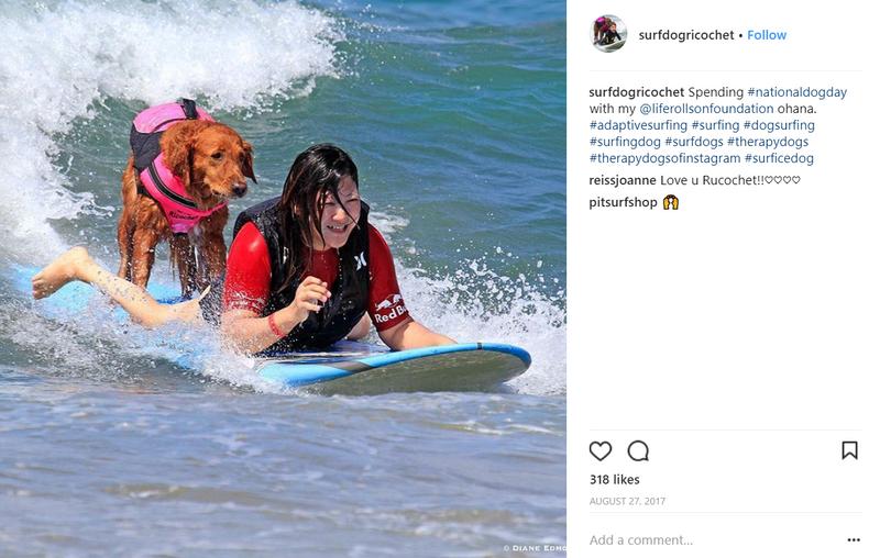surf-dog-ricochet