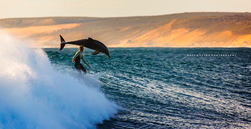 surfing-dolphins-kalbarri-western-australia