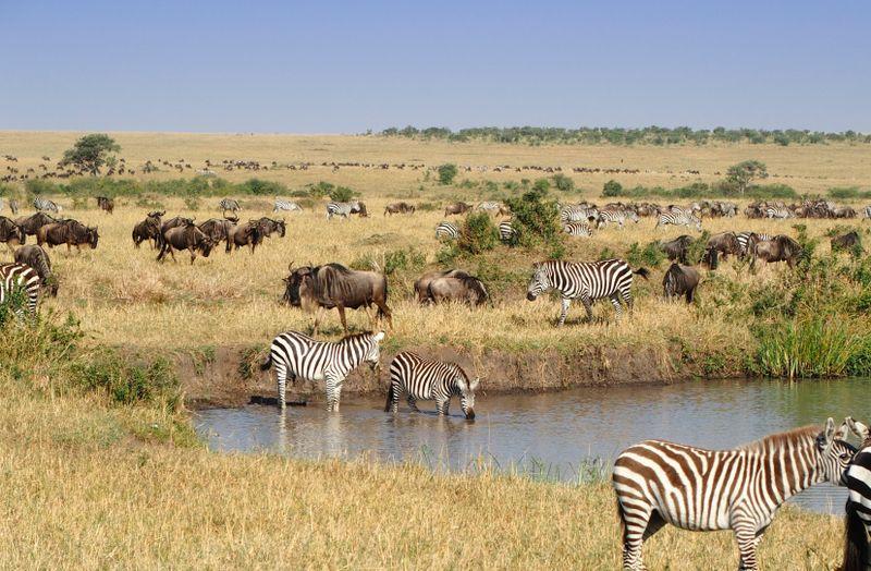 animals in masai mara