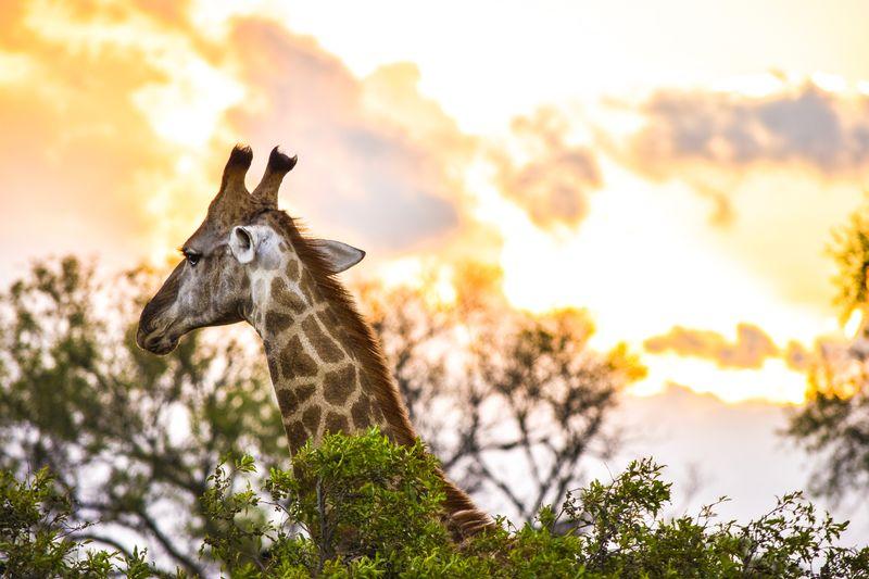 kruger-park-south-africa