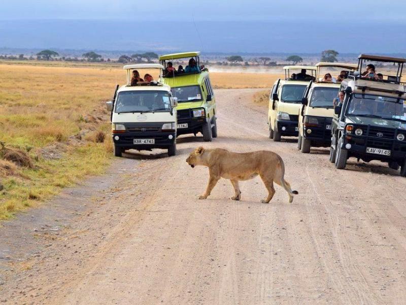vehicles on a safari in Kenya