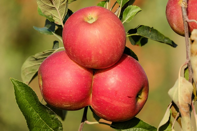 Foods that all Yogis & Non-Yogis Should Eat: Apples