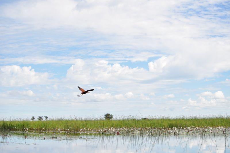 delta in botswana