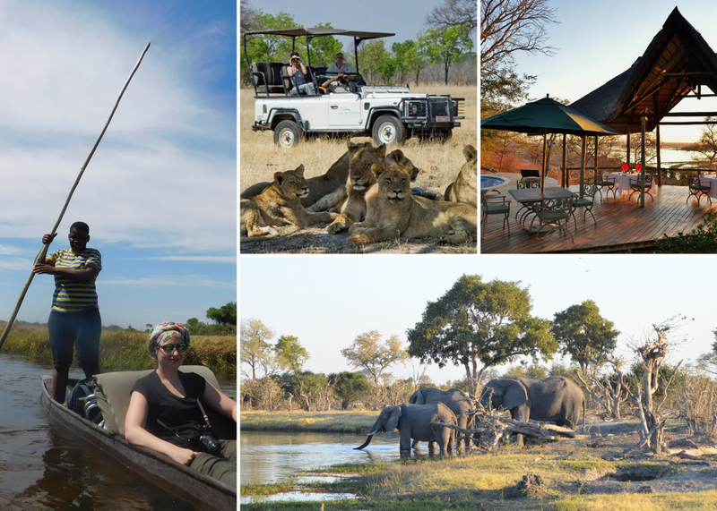 safari in chobe national park