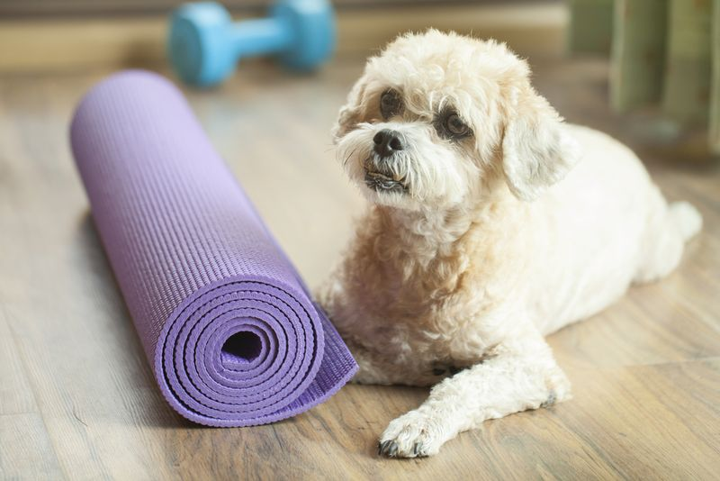 dog with yoga mat rolled up