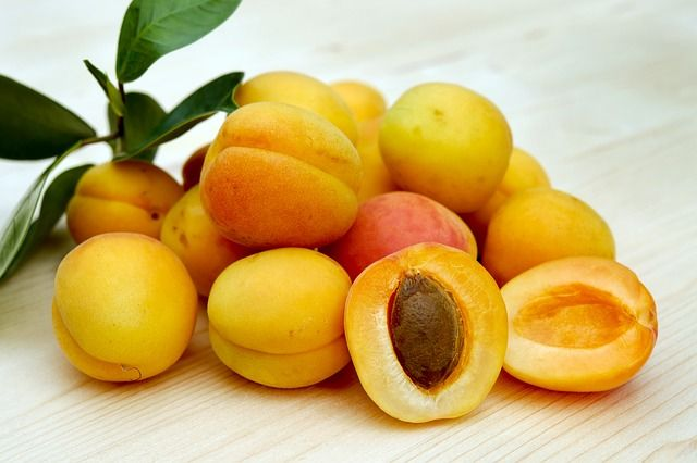 apricot seed