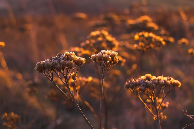 photography tip: golden hour