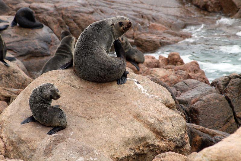 Seals in Namaqua National Park