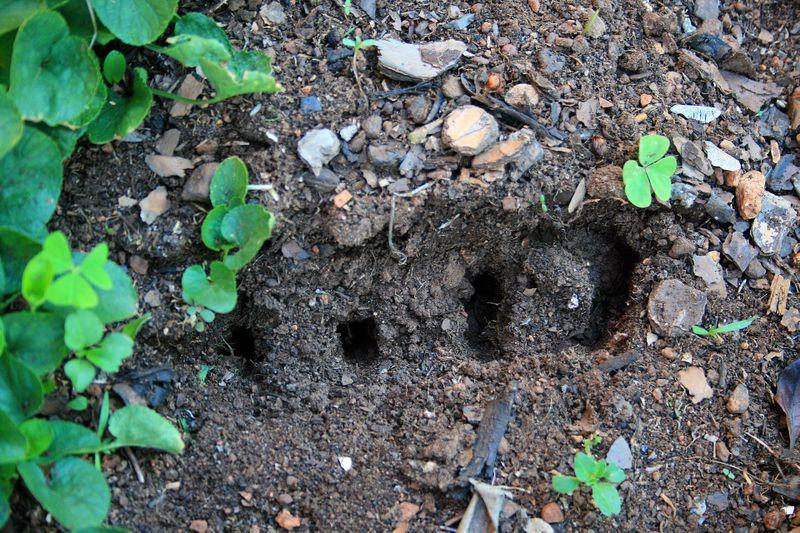 planting holes