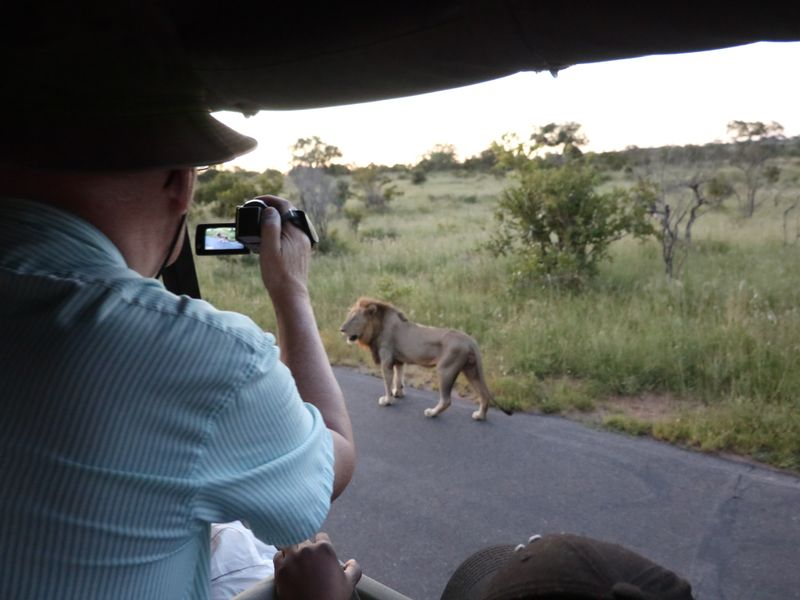 guest filming a lion on an african safari