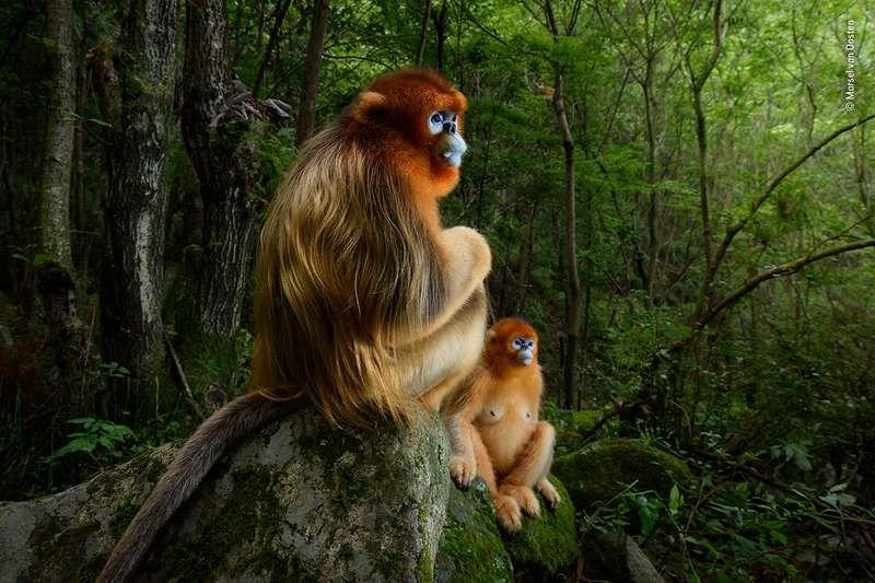 Wildlife photography safari