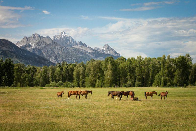 horse-riding-wyoming-usa