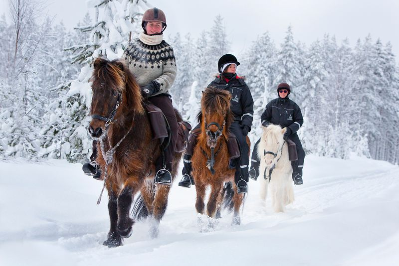 winter-horse-riding-sweden-lappland