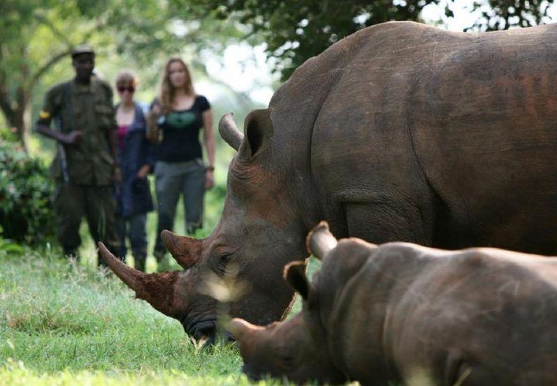 trekking rhinos in uganda