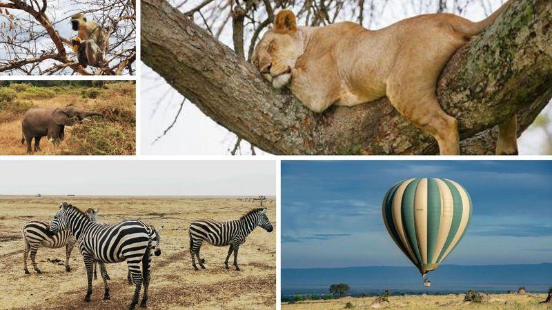 tarangire, lake manyara and ngorongoro crater safari