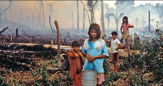palm oil plantation with child workers indonesia