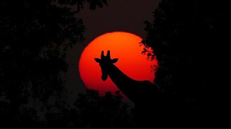 africa-safari-sunset