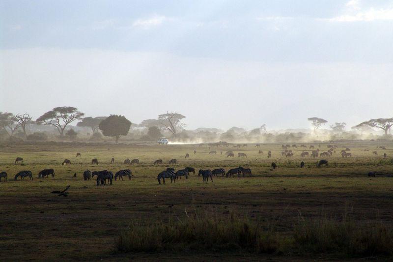 animals in the masai mara , kenya
