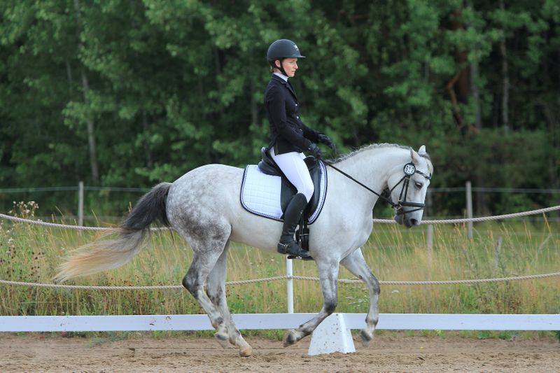 dressage-horse-riding-holidays