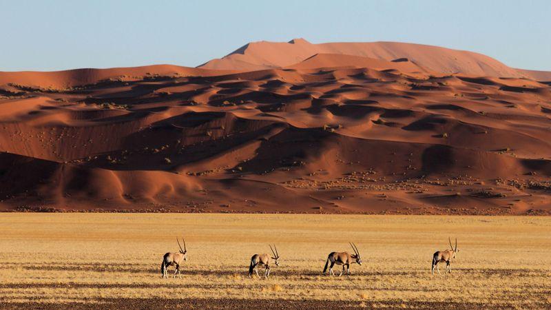 spectacular scenery in namibia's desert