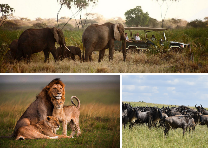 budget safaris in kenya