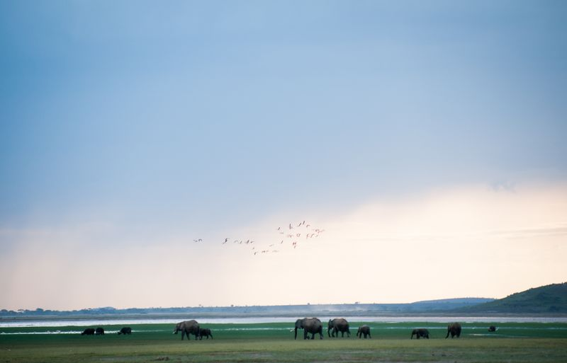 elephants-amboseli-national-park (2)