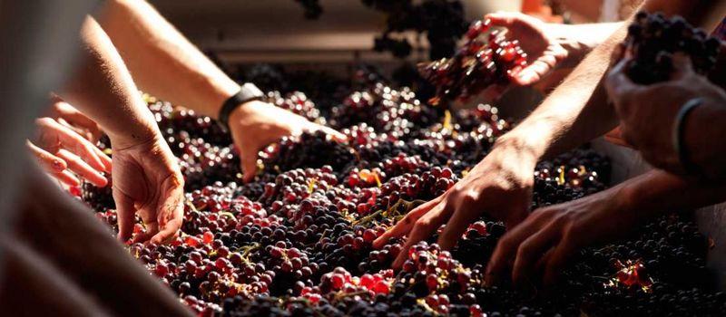 processing wine