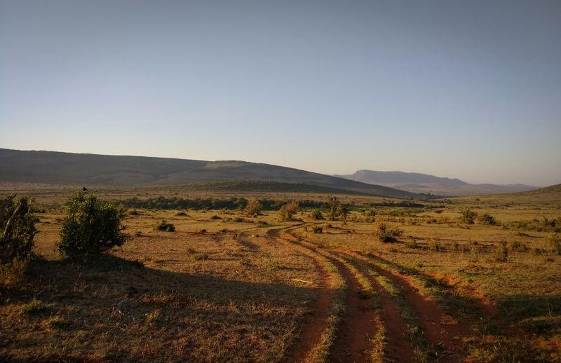safari-maasai-mara