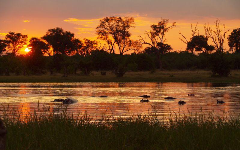 sun setting over moremi game reserve