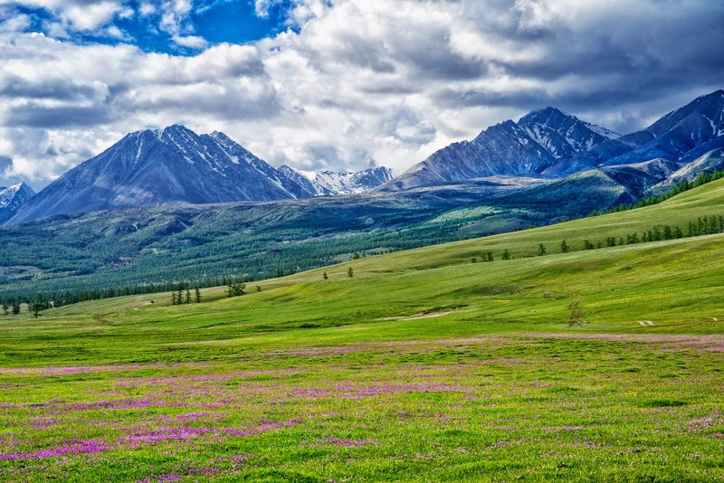 Flower-filled meadow in Mongolia