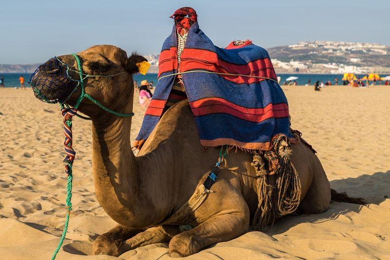 surf-morocco