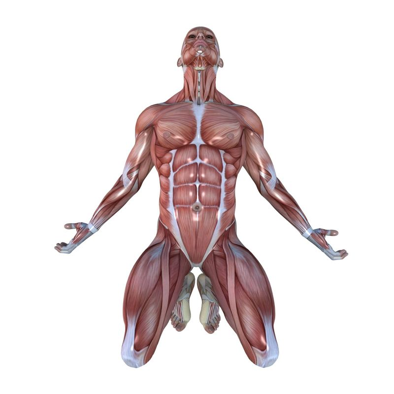 The 13 Major Muscle Groups Of The Body And Their Functions