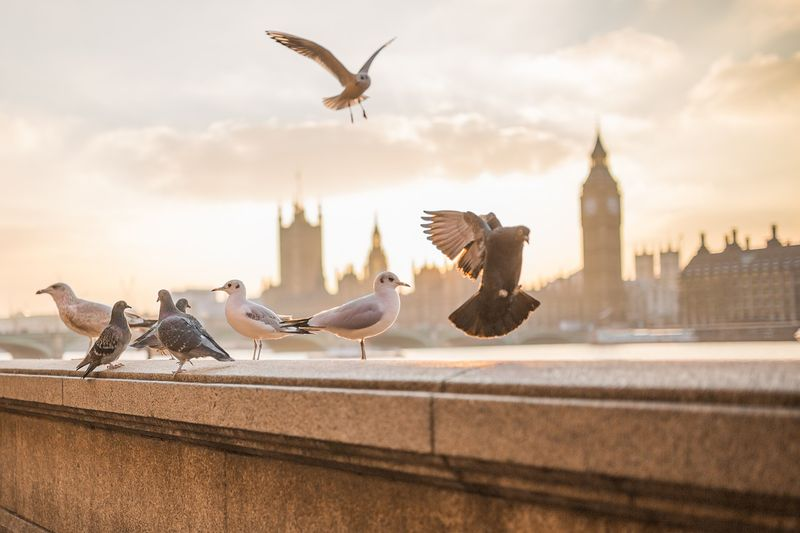 uk at a glance doves and seagulls over london