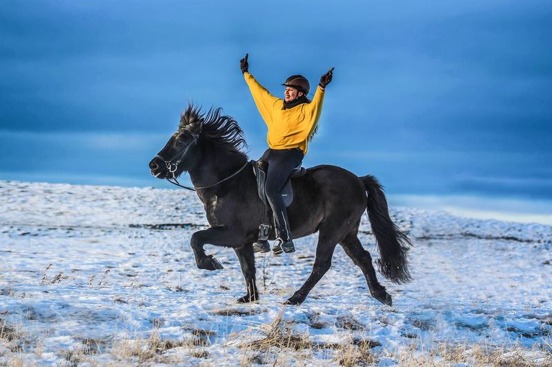 horse-riding-reykjavik