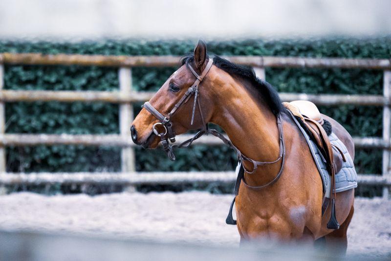 horse-tack