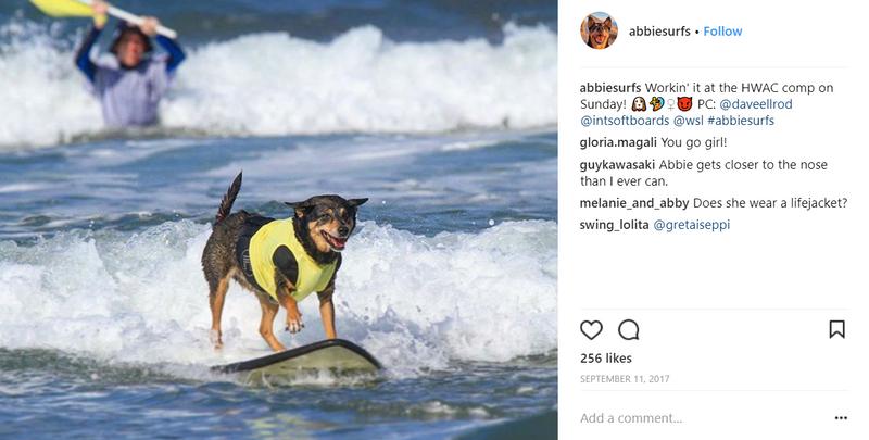 abbie-girl-surf-dog