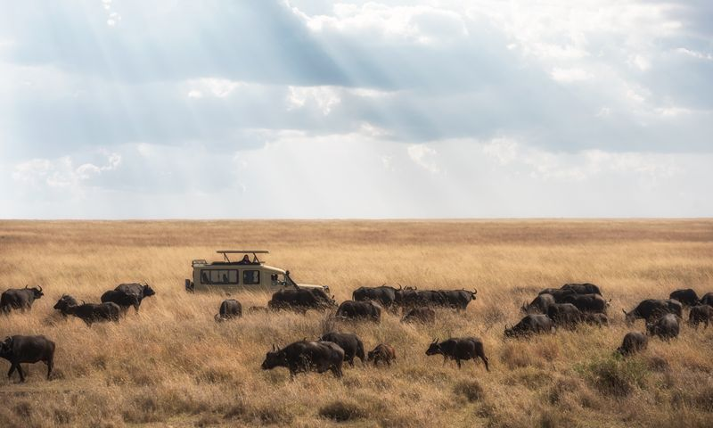a jeep in the serengeti, tanzania