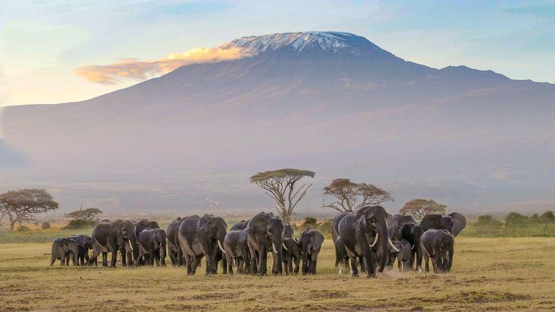 Your Guide to Visiting Amboseli National Park - BookAllSafaris.com