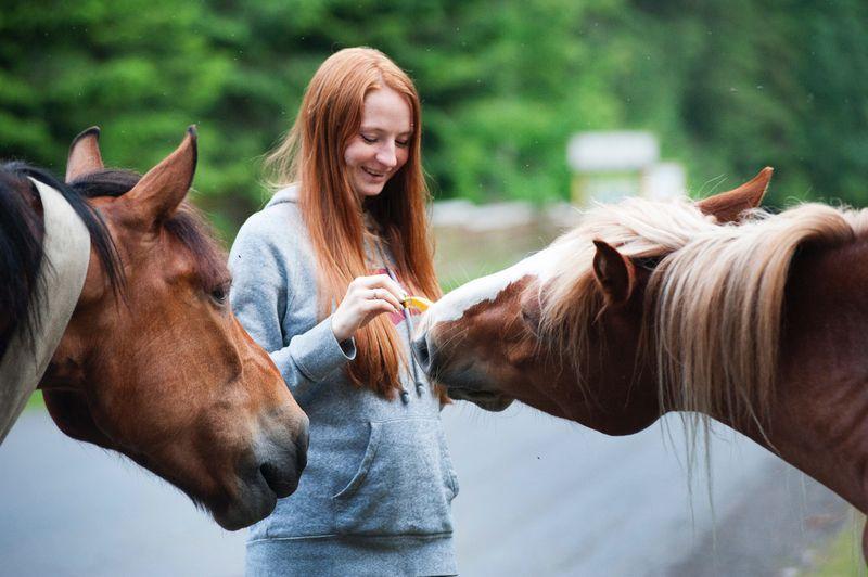 lady feeding horse