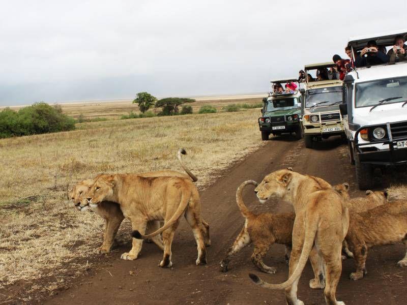safari vehicles watching lions in Kenya